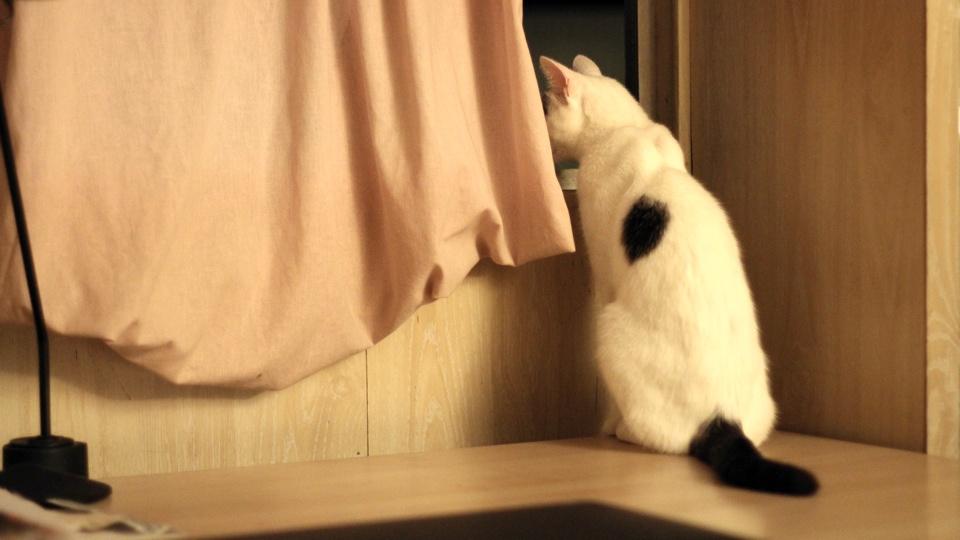 Rufus Cornelius T. Cat - Inside