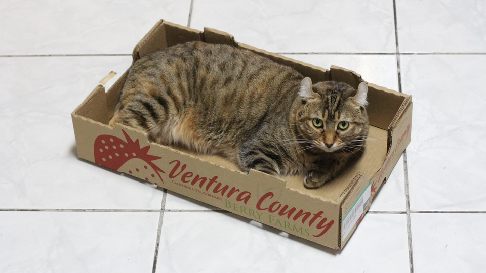Where there is a box there is a cat