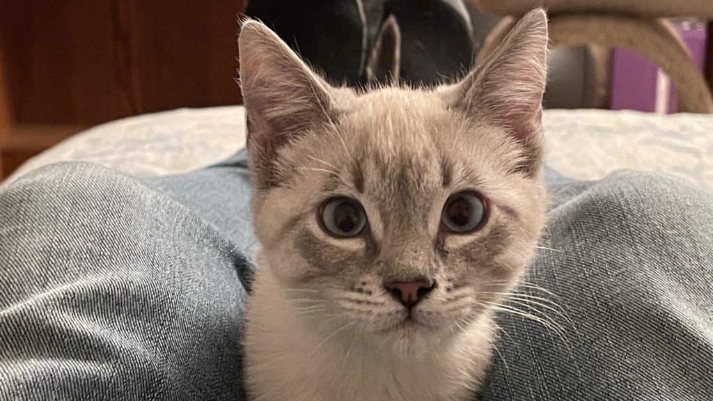 Shampoo T. Kitten