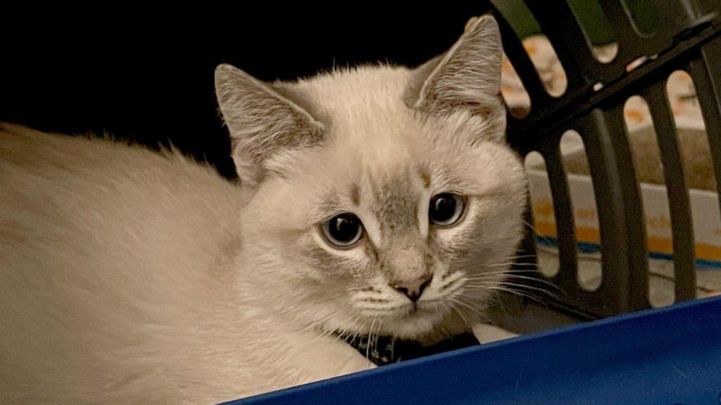 Elliot Spritzer T. Kitten